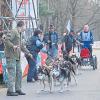 Teilnehmerrekord bei Hunderennen in Spremberg am 22.11.