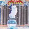 Raubkatzen in weiß zu sehen  vom 26. Februar bis zum 8. März