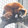 Senftenberg: Nachwuchs im Tierpark