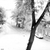 Spremberg: Kritik am Baumbestand der Stadt