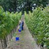 Weinbergfest mit Wein und Ziegenkäse auf dem Granoer Weinberg