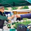 Wochenmarkt zurück in Cottbus
