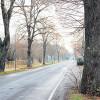 Drachhausen: Niederlausitzer Alleen sind in traurigem Zustand