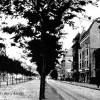Cottbus: Einige der Bäume stehen noch