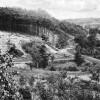 Spremberg: Waldweg Wilhemstal