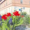 Frühjahrsputz in Ströbitz an diesem Samstag, 28.3.15