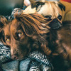 Warum das Impfen bei Tieren wichtig ist