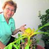 Kleinleipisch: Erste Blüte nach 12 Jahren