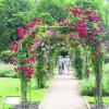 Rosengartenfesttage locken Lausitzer Gartenliebhaber nach Forst