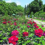 Altes Forst: Die Friedensfahrer-Ankunft in der Berliner Straße