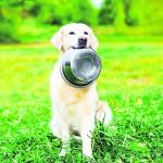 Schlittenhundewettkampf in Spremberg