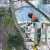 Baumbeschnitt im Winter beginnen