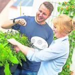 Tipps zum Tomatenanbau