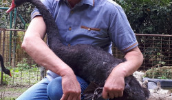 Cottbus: Vögel im Tierzelt