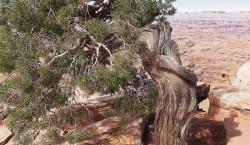 Go West: Felsenstädte der Anasazi-Indianer