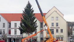 Spremberger Weihnachtsbaum aufgestellt