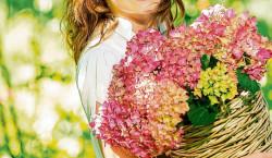 Region: Hortensien schneiden