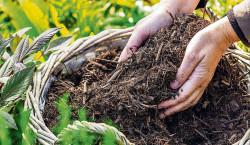 Region: Mulchen schützt vor Austrocknung