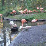 Cottbus: Tierparkförderer feierten