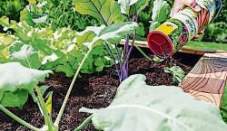 Region: Für gesundes Gemüse