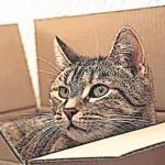 Ratgeber Tier: Notdienst für Tiere