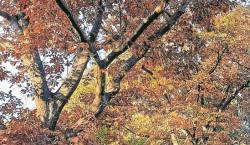 Der richtige Herbstschnitt