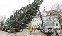 Kolkwitzer Weihnachtsbaum wurde aufgestellt