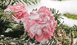 Region: Blumen für die Dauerbepflanzung