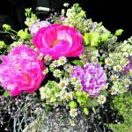 Ratgeber: Frühblüher umpflanzen