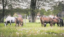 10 Jahre Pferdegeflüster in Kolkwitz