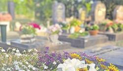 Blütenfülle auf dem Sommergrab