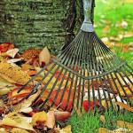 Herbstanfang: Jetzt den Garten auf die Kälte vorbereiten
