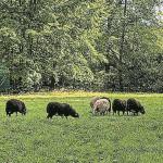 Landes-FDP kritisiert Brandenburgs Klimaträgheit