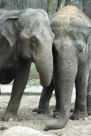 100529elefanten