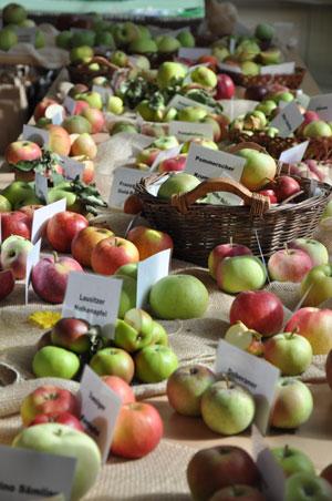 Apfelsorten für jeden Geschmack