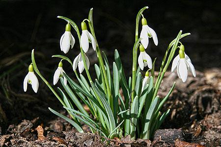 """Damit """"Leichhardt"""" in unseren Gärten blüht"""