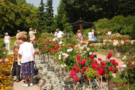Rosengartenfesttage mit einzigartiger Schnittrosenschau erleben