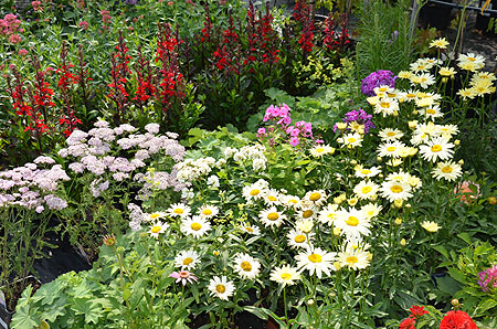 Gartenzeit für Erdbeeren und farbenfrohe Blühpflanzen