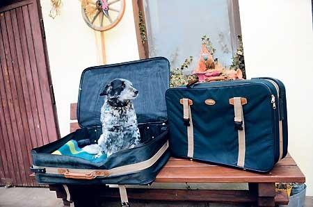 Tierischen Urlaub ohne Stress planen