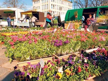 Forster Frühlingsmarkt am 15.4. immer beliebter