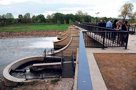 Cottbus: Fische sollen durch Denkmale klettern