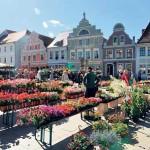Blütenpracht zum Geranienmarkt  am 6. und 7.5.