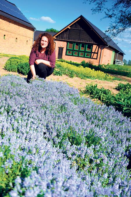 Wildblumen als Wirtschaftsfaktor für die Lausitz