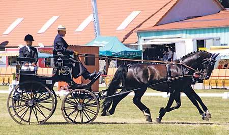Weltklasse-Pferdesport lockt nach Drebkau vom 16.-19.6. und vom 25.-26.6.