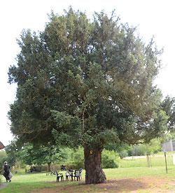 Weniger Eulen für tolle Bäume