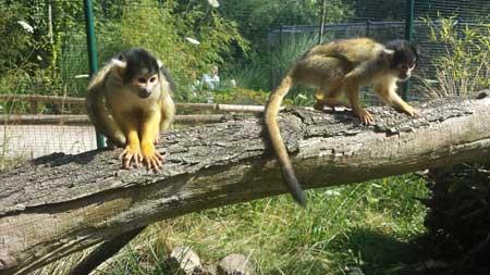 Cottbus: Tierparkförderer auf Studienreise