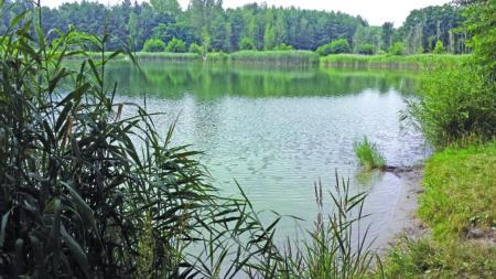 Sachsendorfer See: Sauberes Wasser, in Schilflücken schmale Zugänge für Nacktbader, drüben breiter Sandstrand