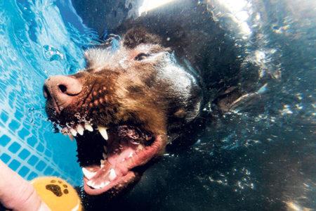 Dog-Festival lockt am 17.9. ins Strombad