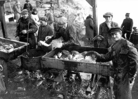 Fischzug lockt nach Peitz