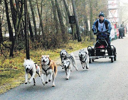 Schlittenhunderennen am 19./20.11. in der Ratsheide